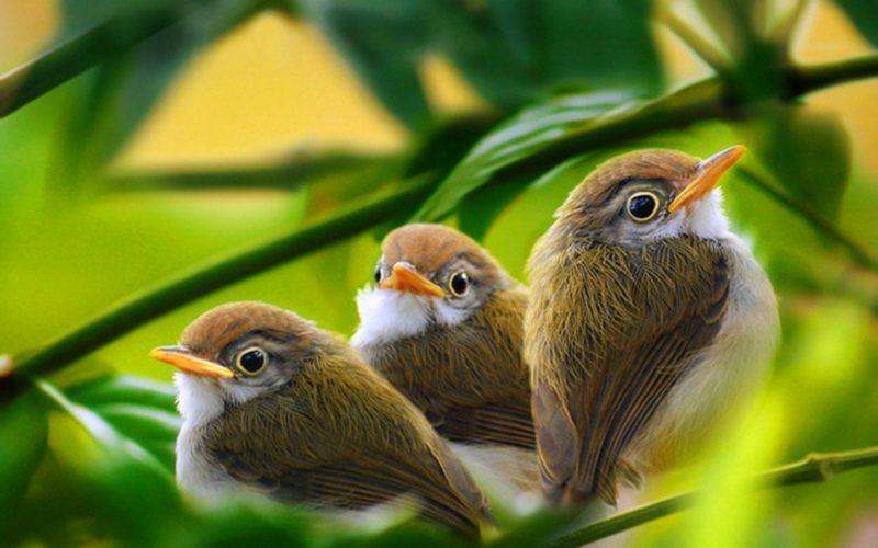 К чему снятся птицы? Сонник птицы