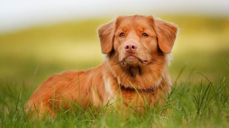 Во сне укусила собака толкование сновидения в различных сонниках