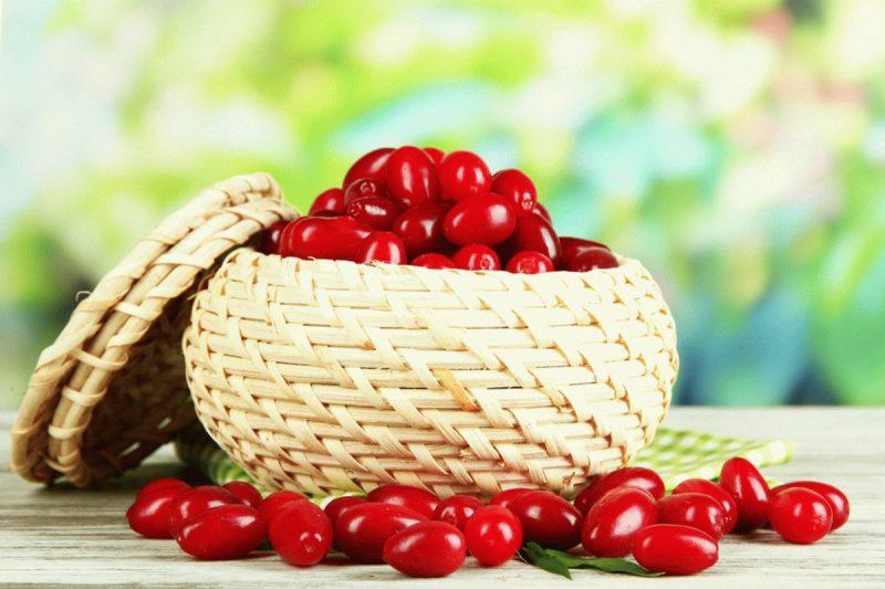 Кизил – полезные свойства и противопоказания ягод, косточек