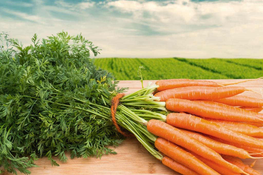 Вред и польза моркови для организма человека