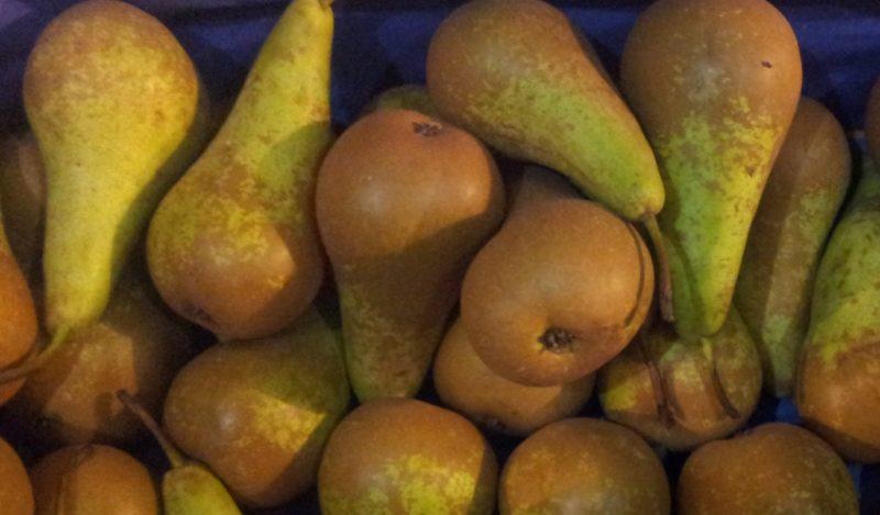 Груша конференция: где растет, описание сорта, полезные свойства, витамины, калорийность