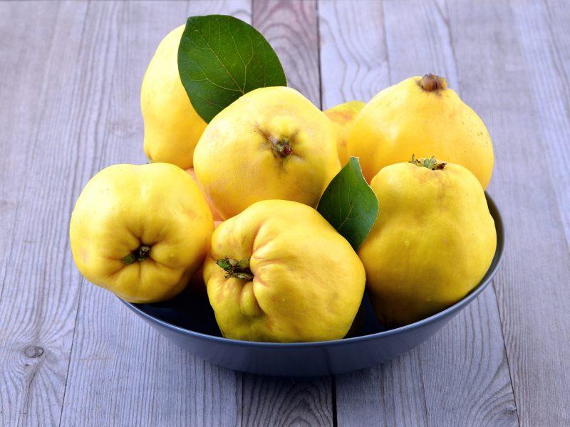 Айва: полезные лечебные свойства для организма человека