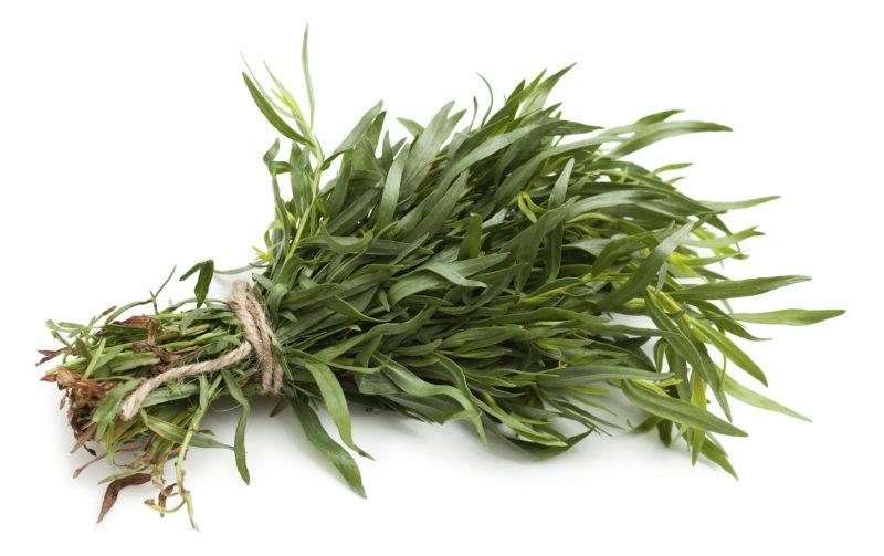 Эстрагон - что это такое? Эстрагон (Тархун) трава: полезные свойства и противопоказания