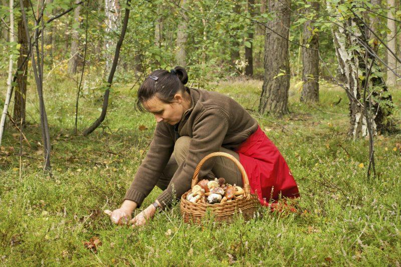 К чему женщине или мужчине снятся белые грибы толкование по сонникам