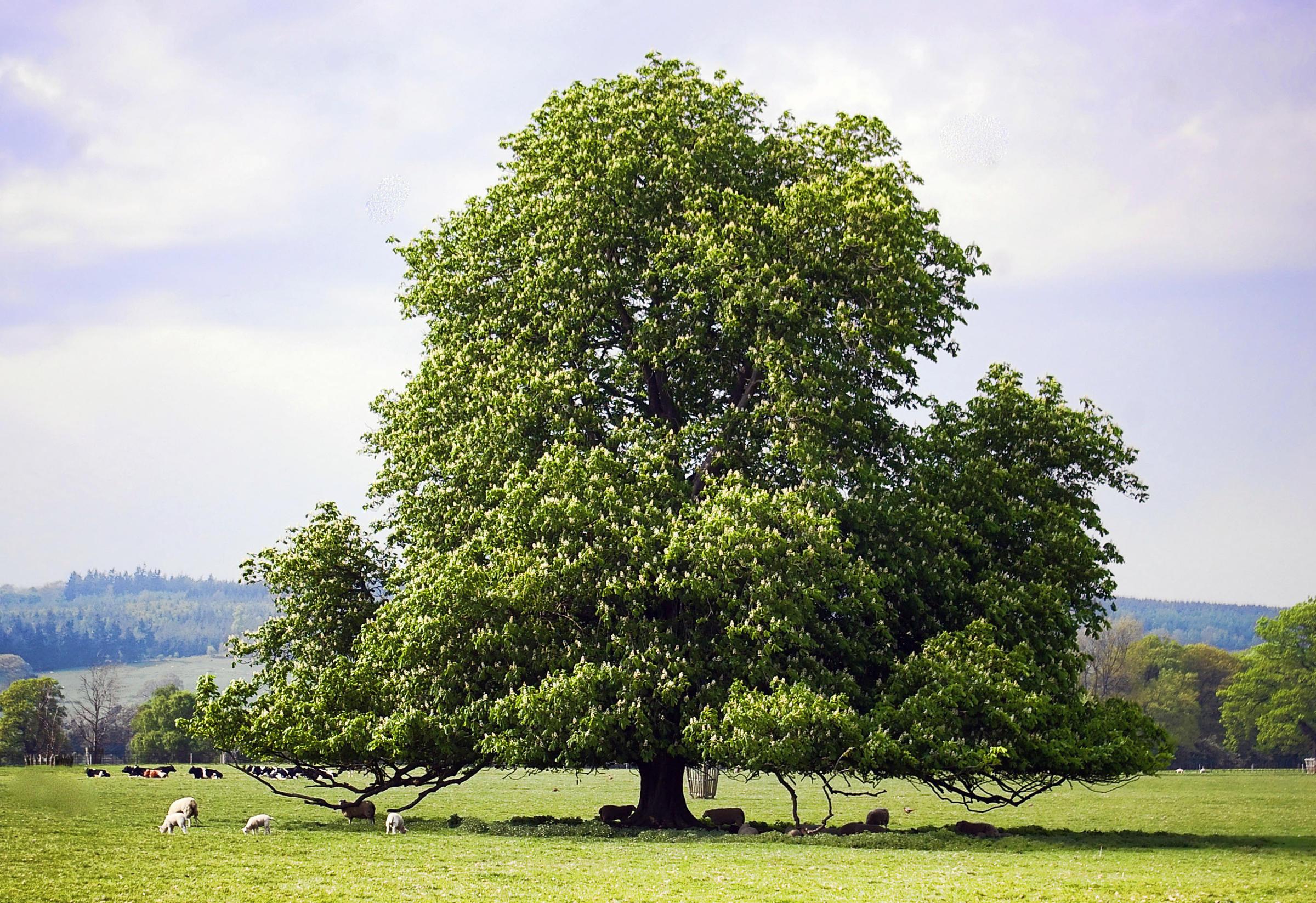 Наличники из дерева своими руками фото