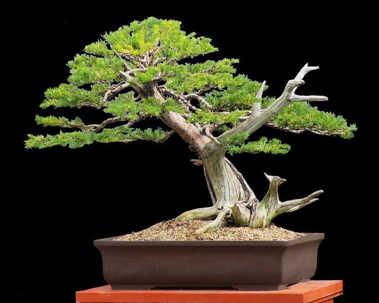 Деревянный сундук картинка можете