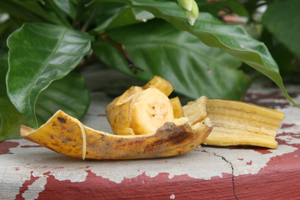 Банановая кожура как удобрение для огорода: как правильно использовать