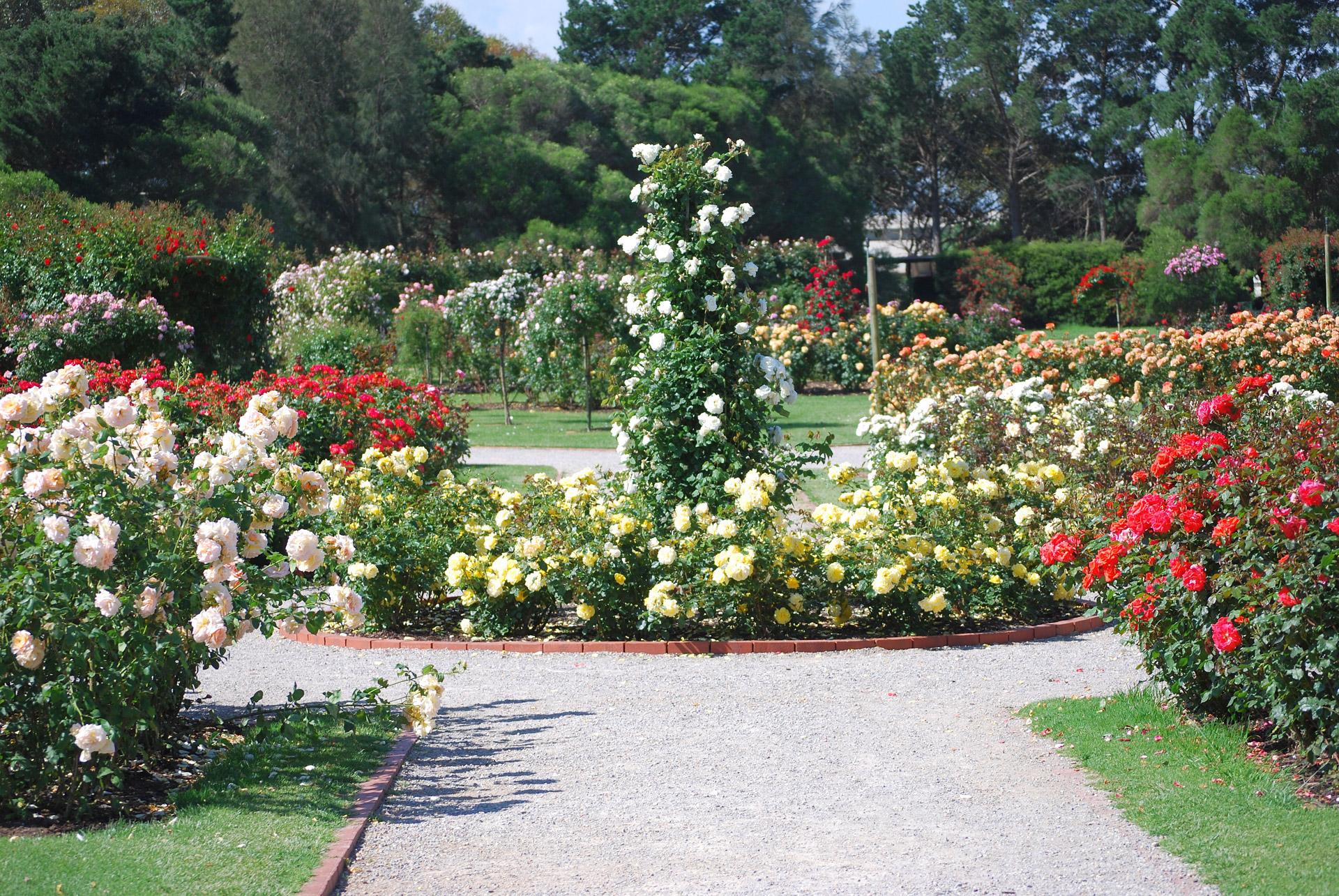 разрабатывает красивые розарии фото предки