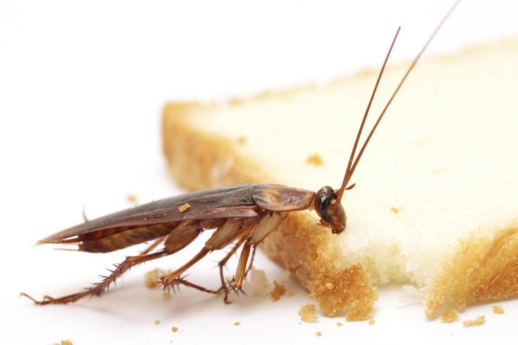 Чем можно травить тараканов в квартире
