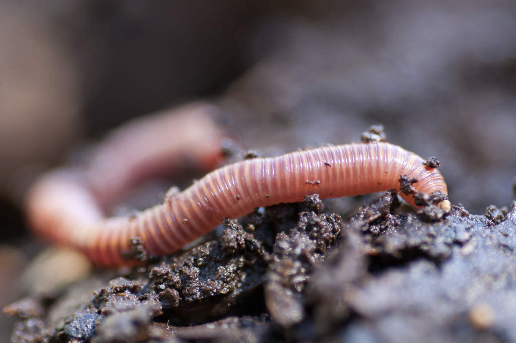 К чему снятся черви: толкование по различным сонникам