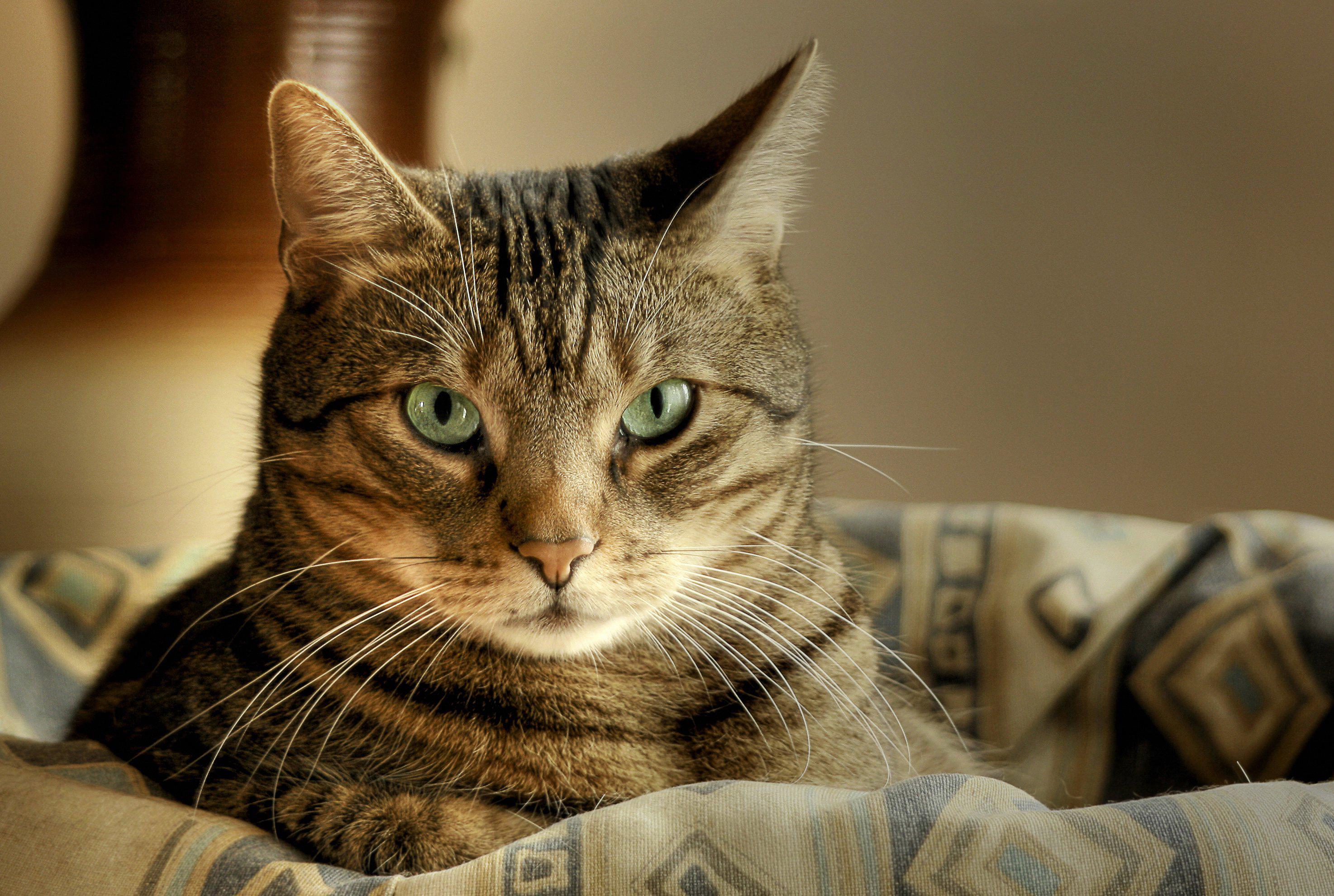 Сонник к чему снятся кошки и котята