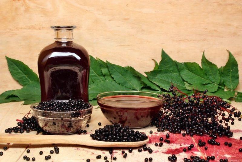 Бузина черная - лечебные свойства и противопоказания