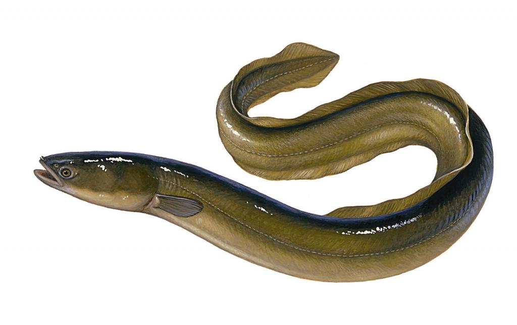 Рок под для рыбалки своими руками фото дрожжевую смесь
