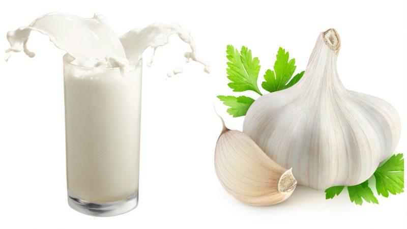 Milk with garlic: what helps, benefits and harms