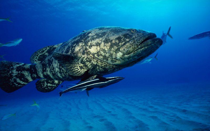 Сонник огромная рыба к чему снится огромная рыба во сне
