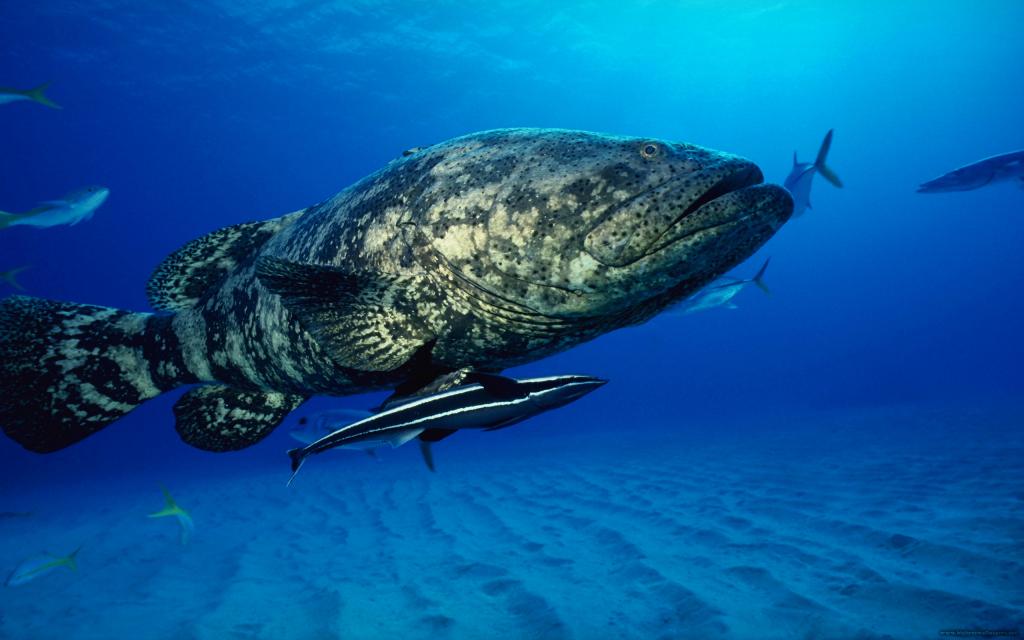 К чему снится большая рыба? Сонник большая рыба во сне
