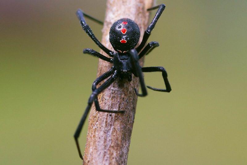 К чему снится черный большой паук. Черный большой паук во сне