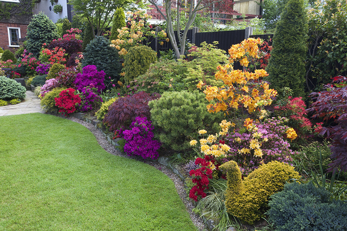 садовая композиция рододендроном фото сегодня решила