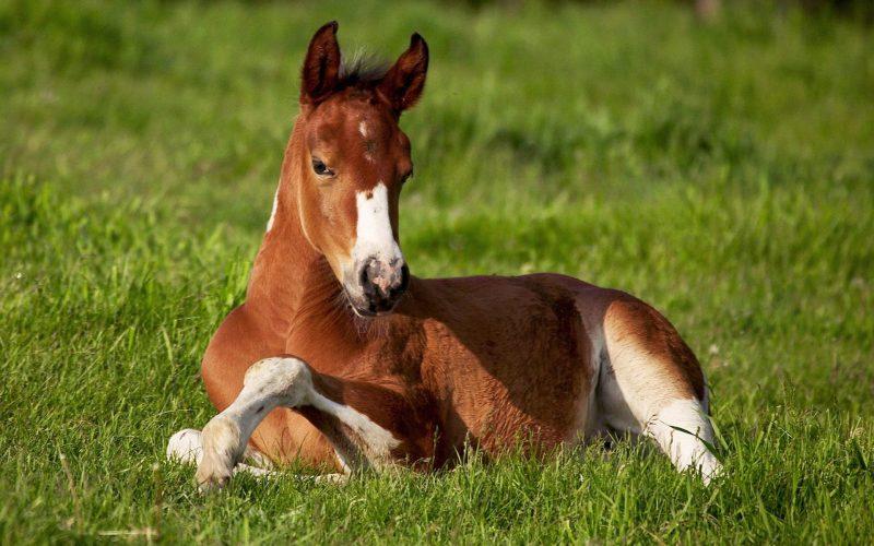 Сонник Лошадь, к чему снится Лошадь во сне видеть