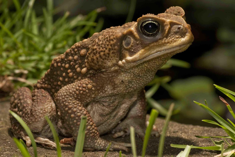 Снится жаба к чему - жабы к чему снятся большие