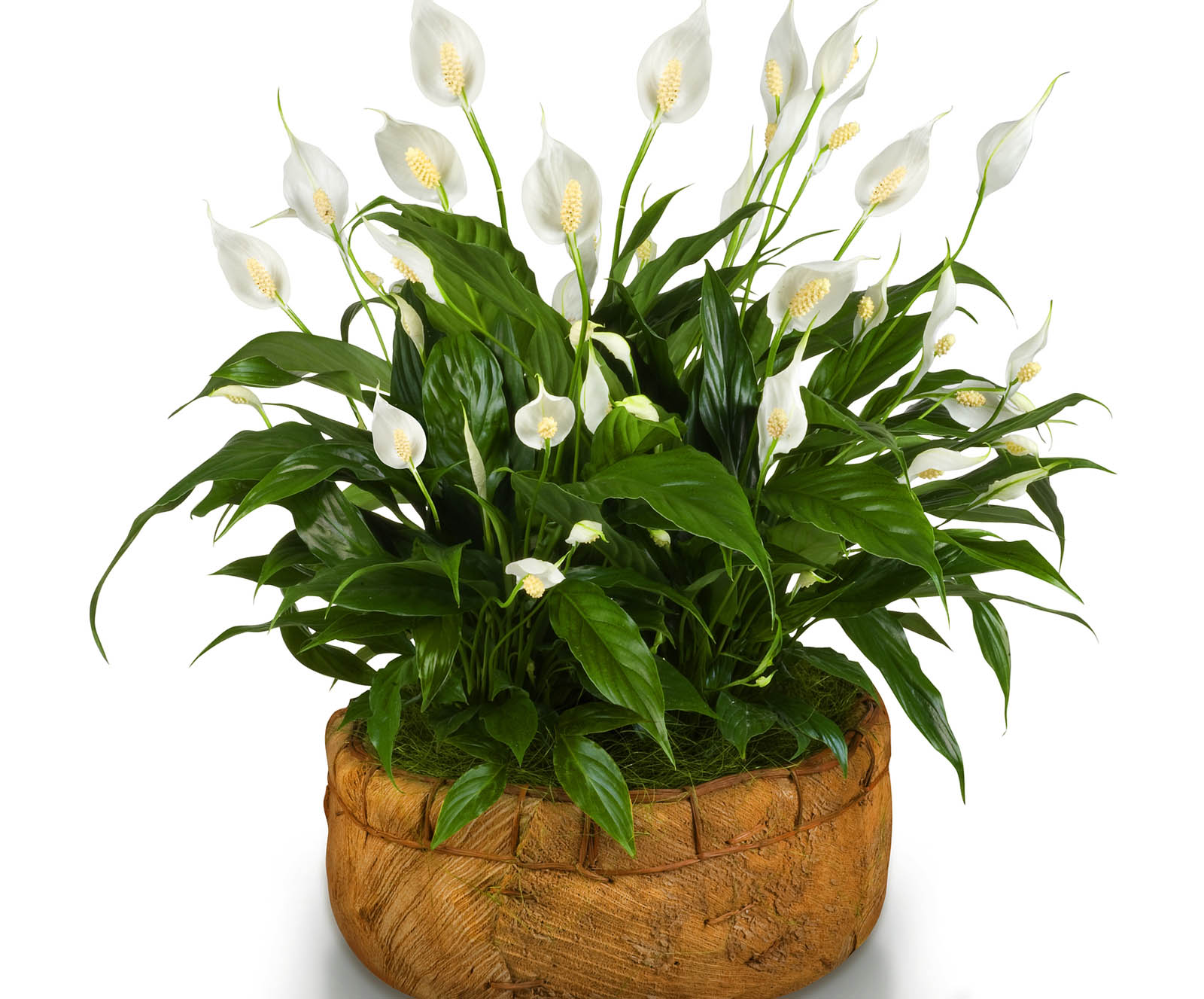 Приметы подарок цветок в горшке
