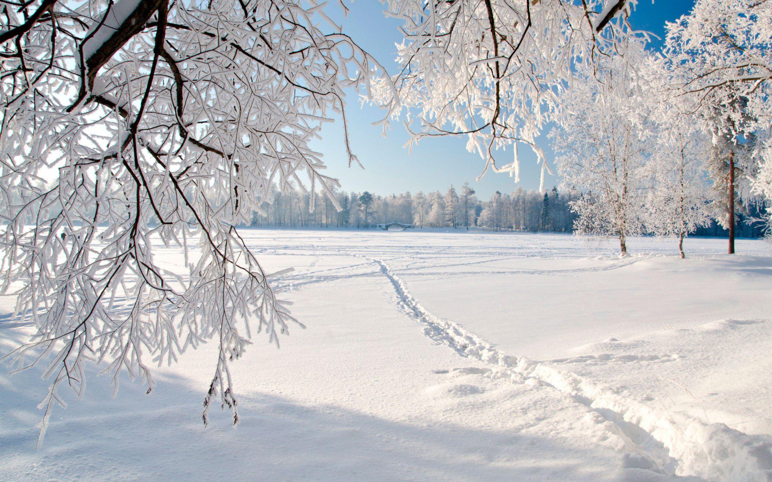 К чему снится чистый белый снег? Сонник: снег белый и чистый, сугробы, снегопад