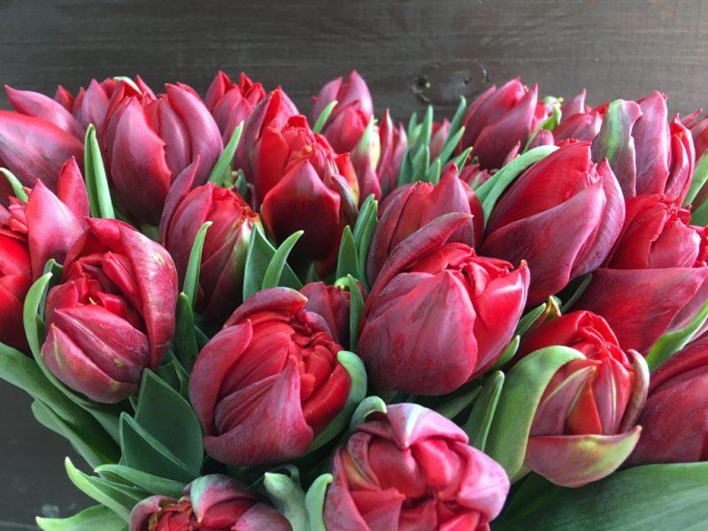 яркость пионовидные тюльпаны сорта и фото возглавляет список