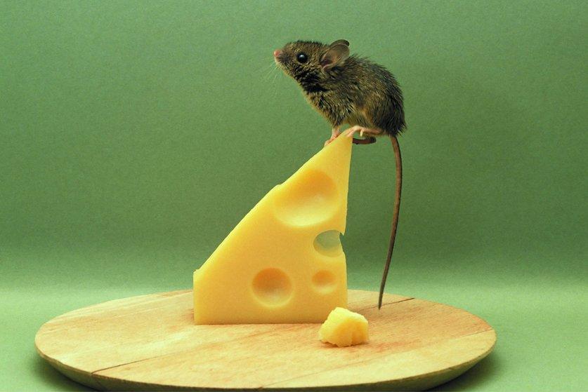 Сонник мыши к чему снятся мыши во сне