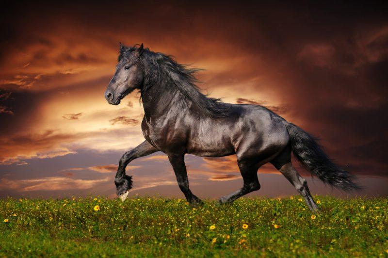 Сонник толкование черный конь