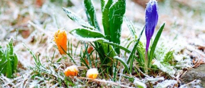 Снег: к чему снится много белого снега