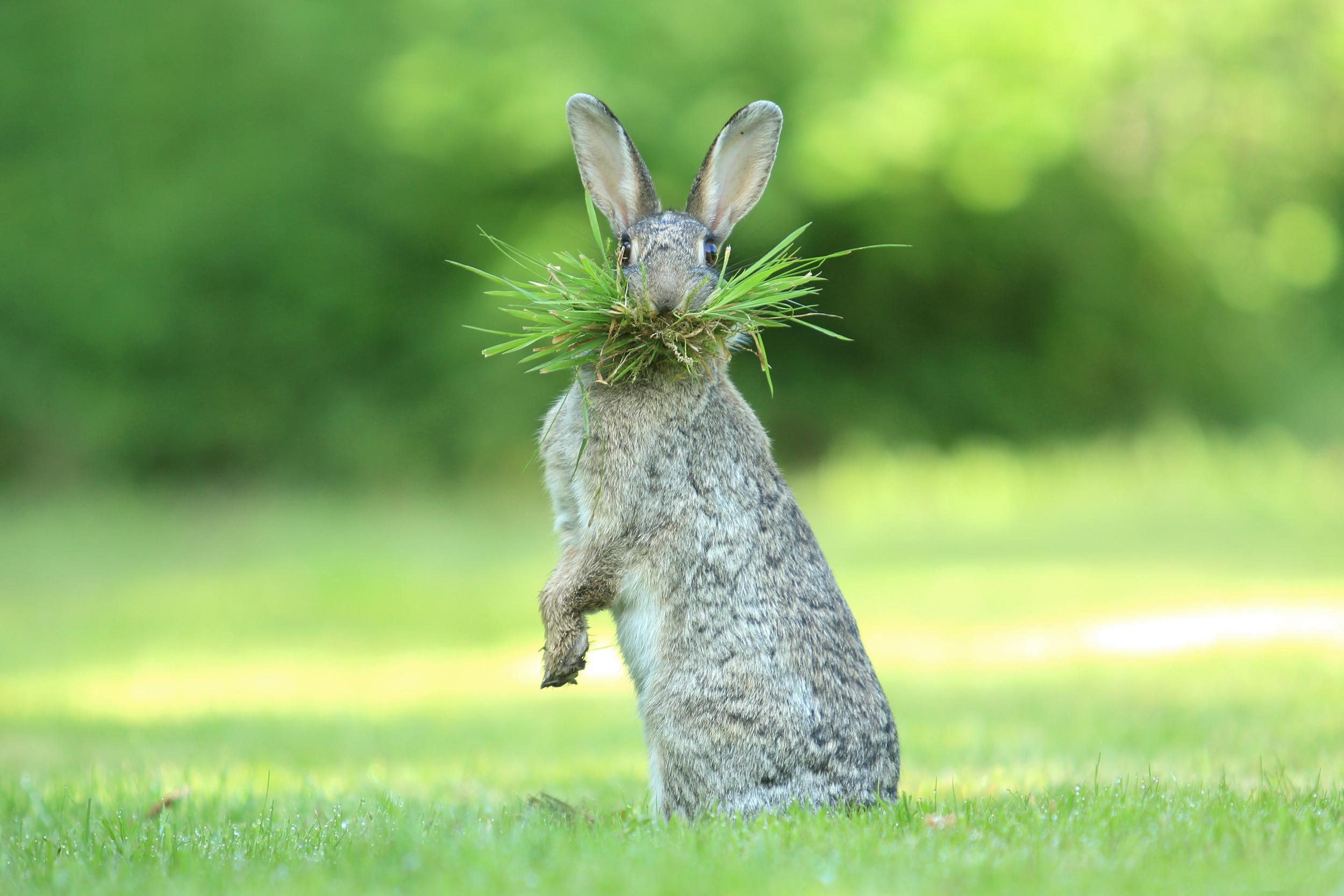 интересные и смешные картинки про животных