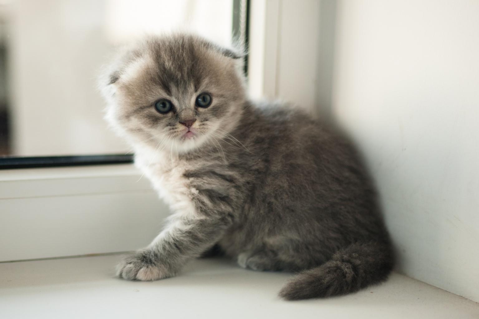 правой кнопкой картинки вислоухих котят смотреть такая вредная