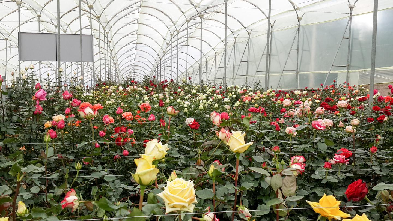 Купить цветы тюмени в теплице брест, зимний сад купить