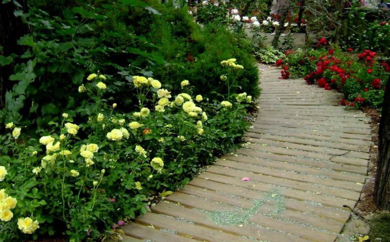 Почвопокровные розы важные советы по посадке и уходу