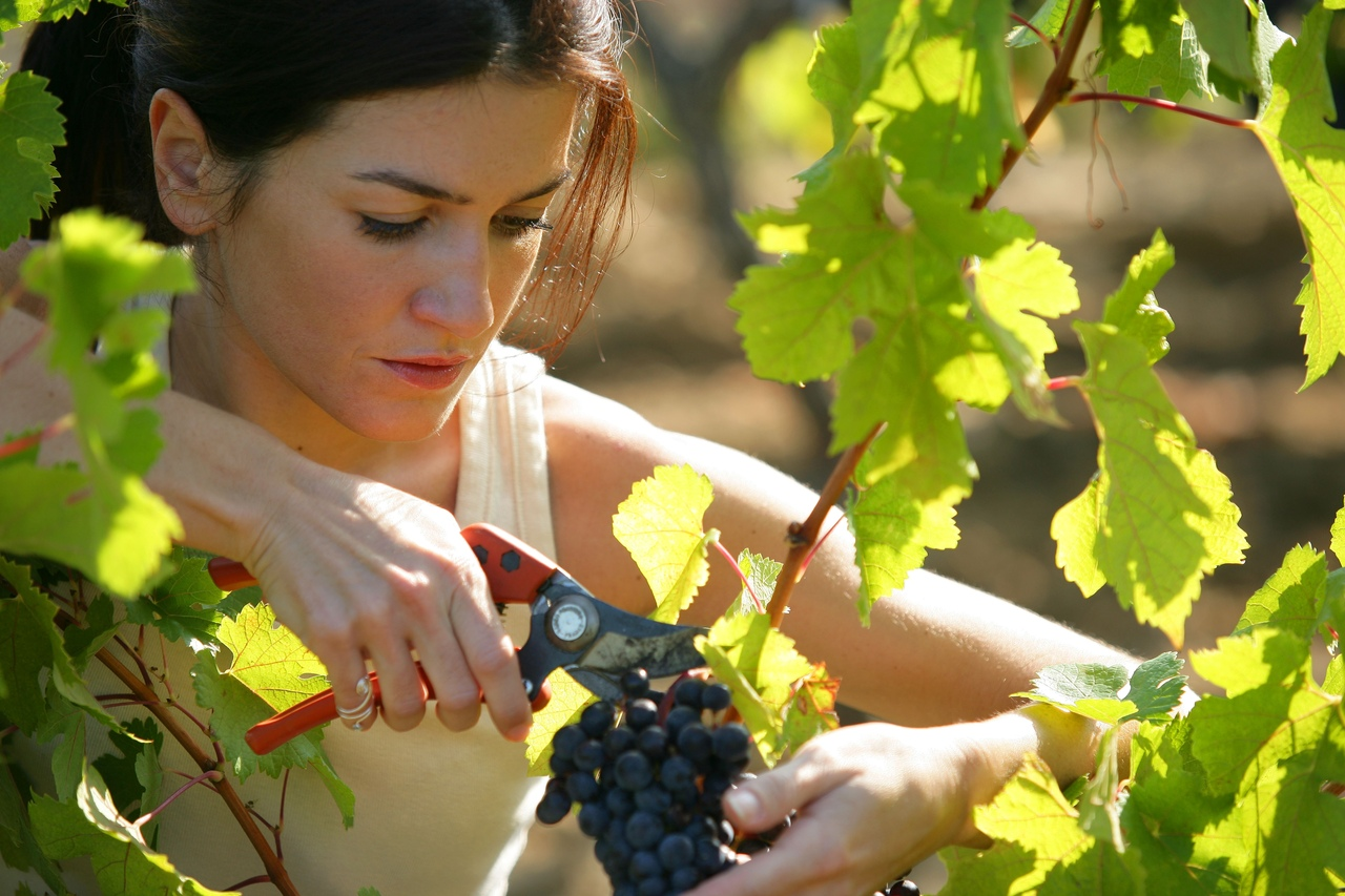 творчество винограда для лица картинки сказать, что нам