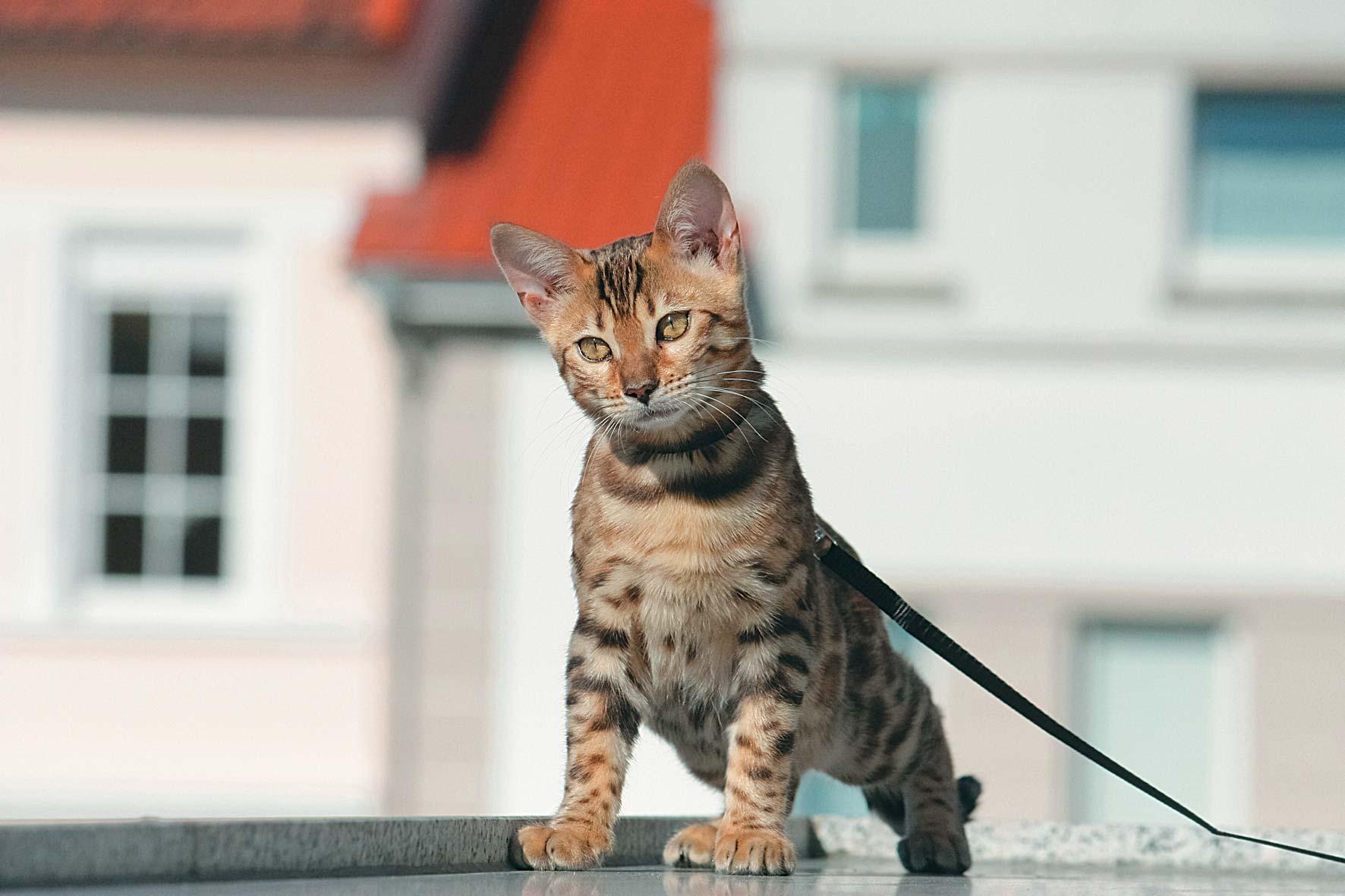 Для любителей животных: 23 причины завести кота в квартире