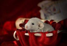 Коллекция фотографий милых мышей