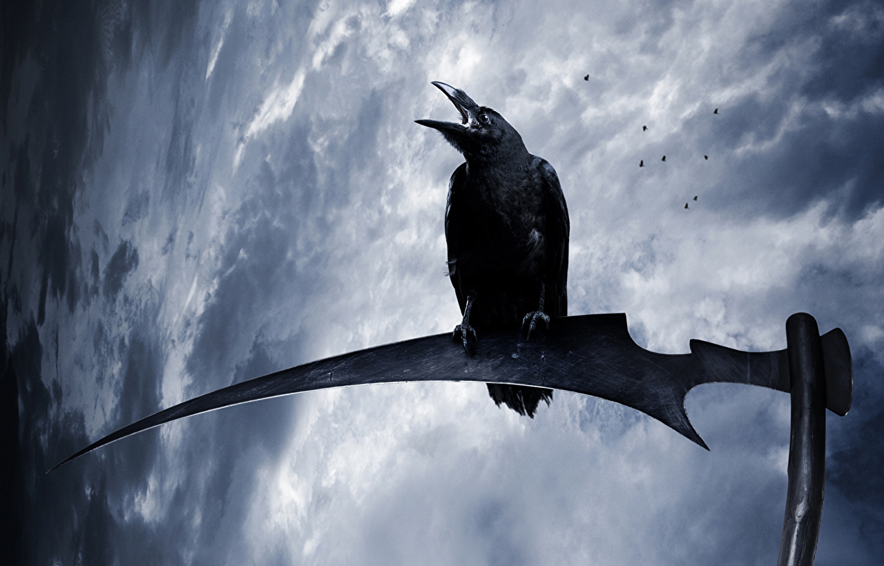 К чему снятся вороны черные? ЭТО ПРЕДУПРЕЖДЕНИЕ! Приснился черный ворон, что это значит?