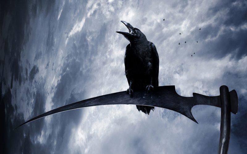 К чему снится черная ворона – сонник: черная ворона во сне