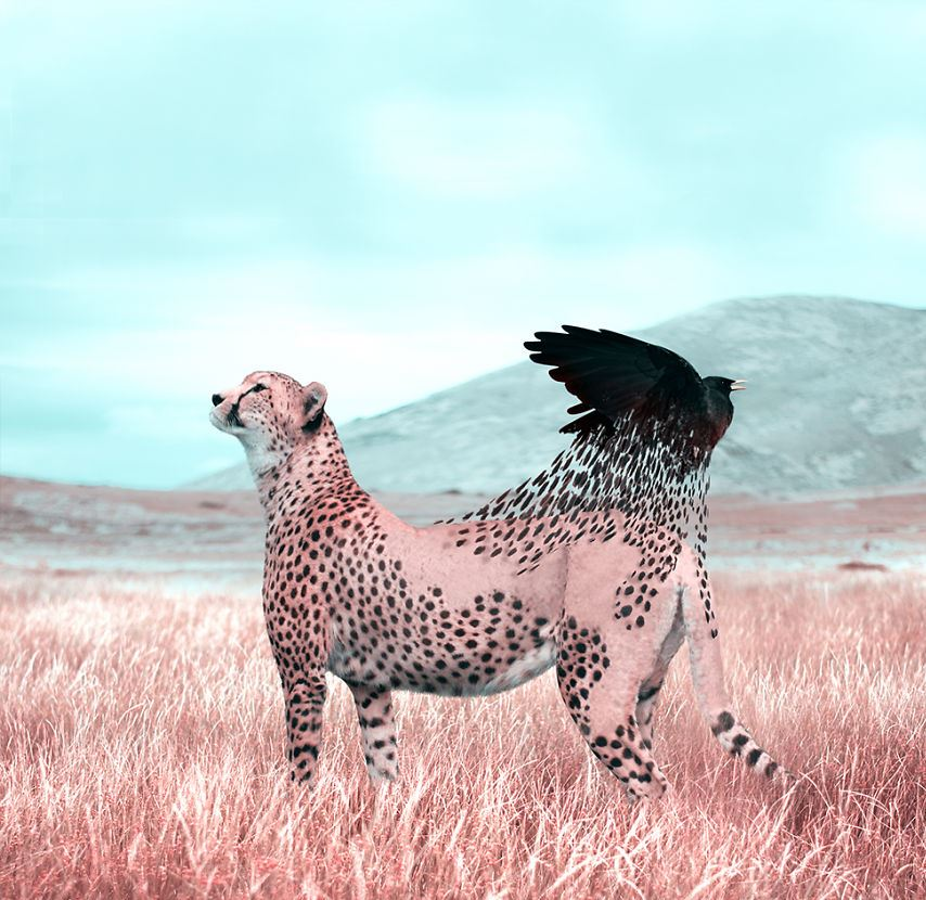 Коллекция необычных животных Жульен Табет