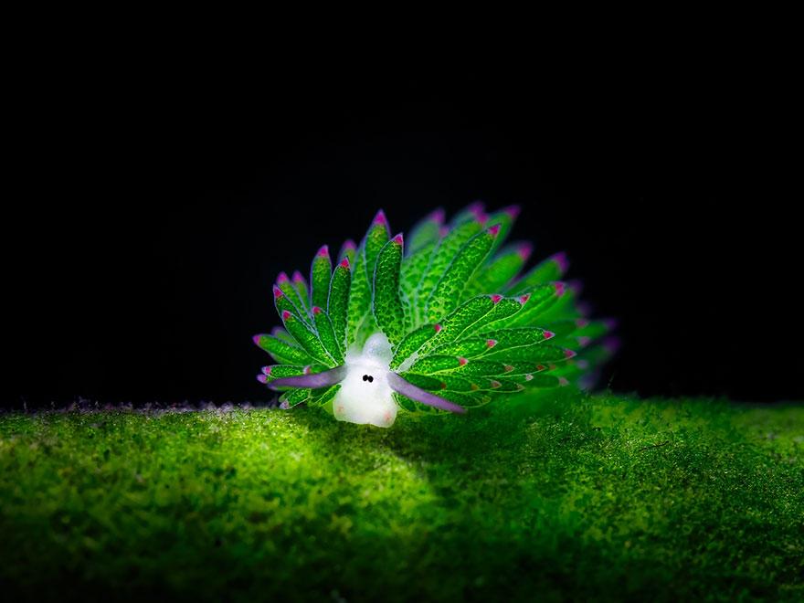 Морские создания, похожие на инопланетян