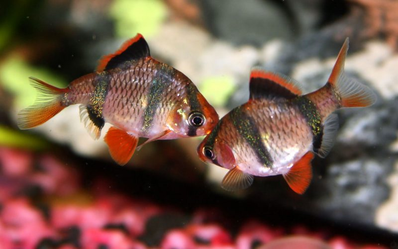 к чему снится рыба ест другую рыбу