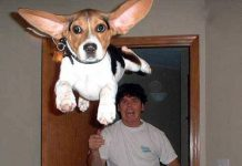 Коллекция фото собак, сделанных вовремя