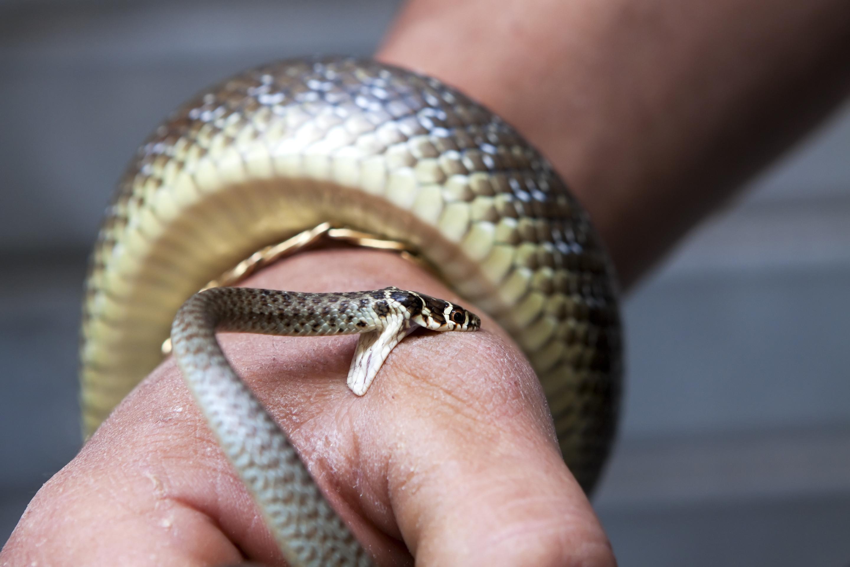 Сонник убивать змей во сне много