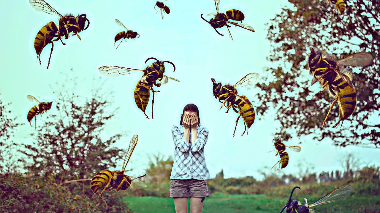 К чему снятся насекомые по различным сонникам