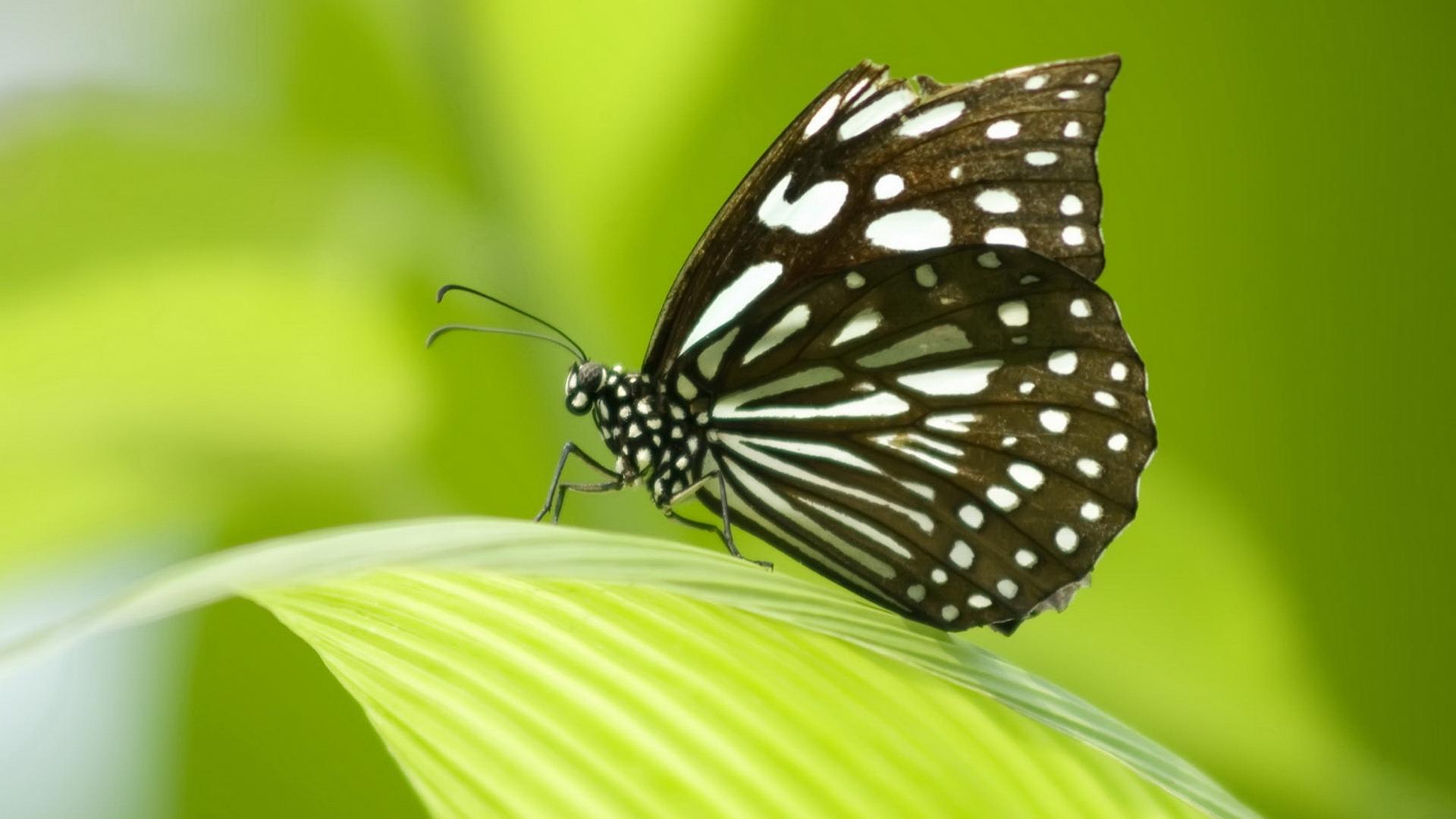Сонник к чему снятся бабочки