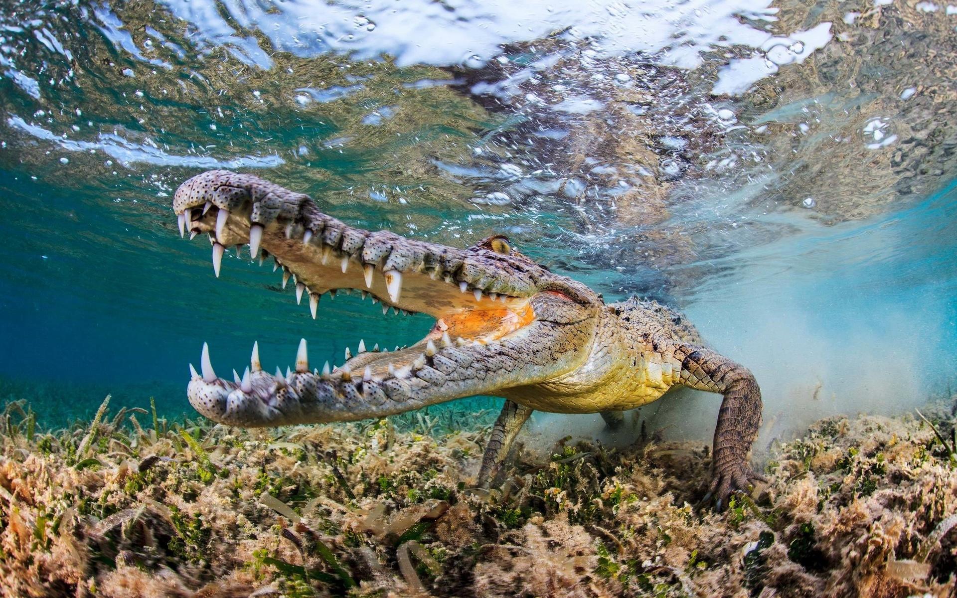 Открытка, картинки красивые крокодилов
