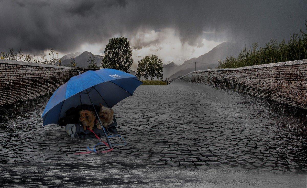 Ливневой дождь картинки