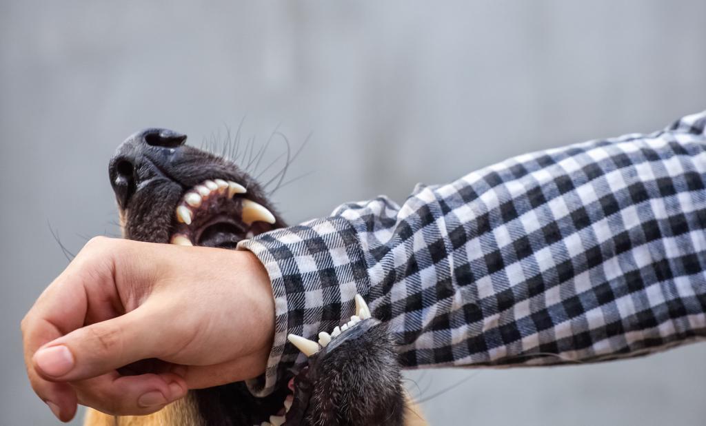 Сонник нападает собака и пытается укусить