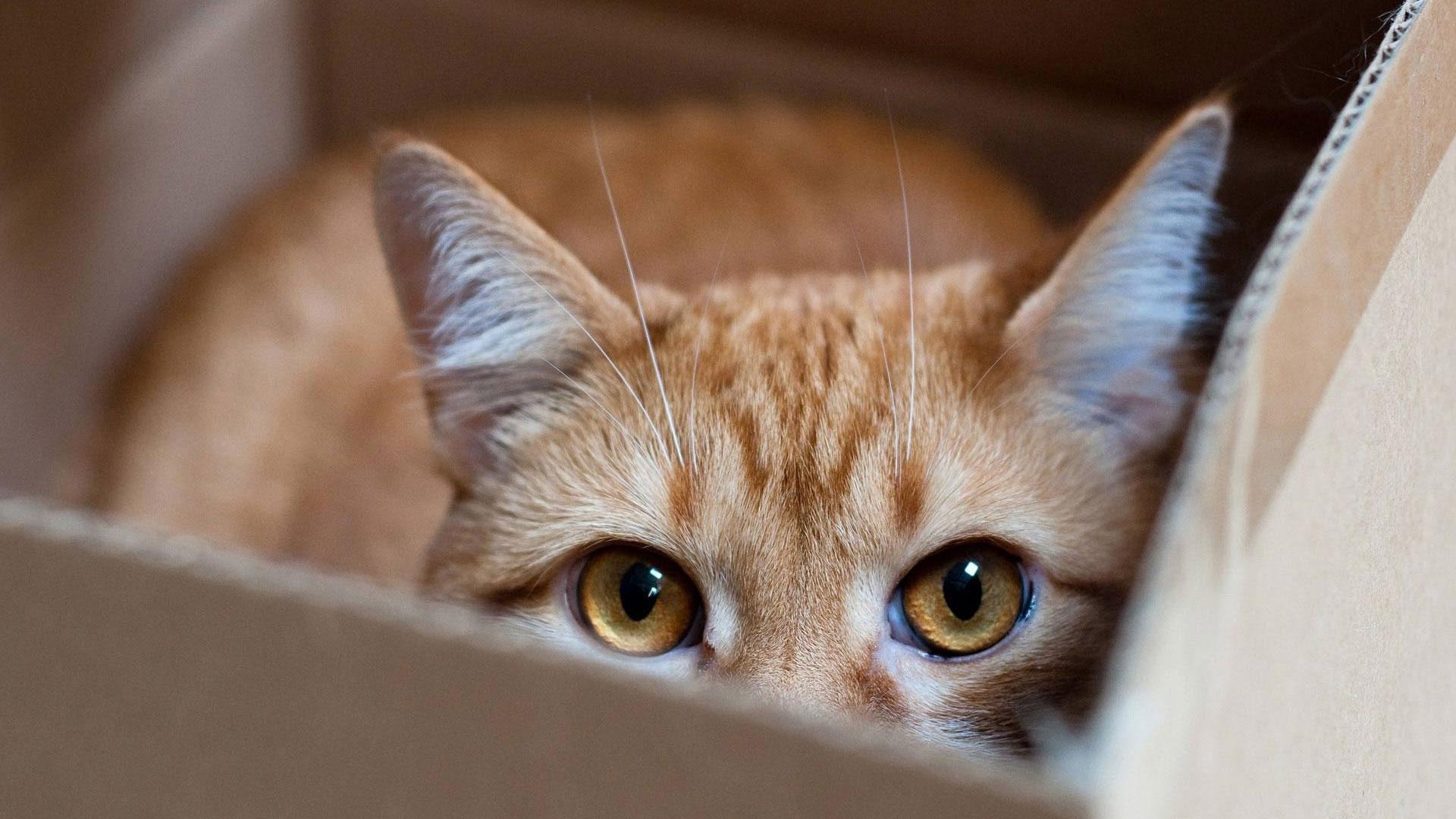 Как убрать у кошки клеща